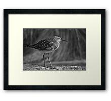 Lil Bird... Framed Print