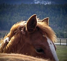Horse & Sunshine by lincolngraham