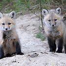 Siblings! by okcandids