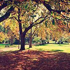 Tones of Autumn in Ballarat by Sean Farrow