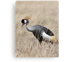 Grey Crowned Crane, Serengeti, Tanzania  Canvas Print