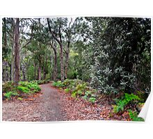 Pathway Through The Forest Poster