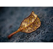 Autumn Leaf Photographic Print