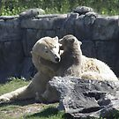 Little polar bear Vicks by angeljootje