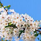 Spring by torishaa