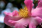 Pink Serenade by Renee Hubbard Fine Art Photography