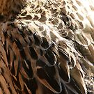 Educated Feathers by DEB CAMERON