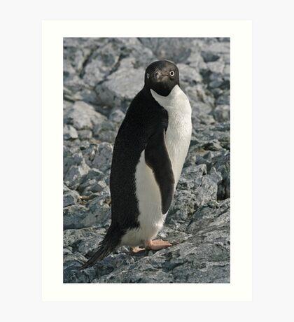 Adelie Penguin 4 Art Print