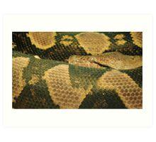 Snake Eye Art Print
