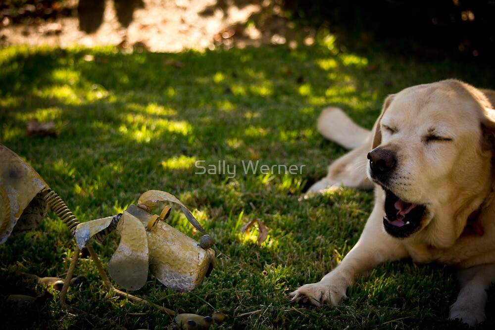 Chatting Labradors? by Sally Werner