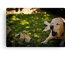 Chatting Labradors? Canvas Print