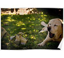 Chatting Labradors? Poster