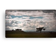 dramatic cows Canvas Print