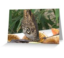Its a bugs life! Greeting Card