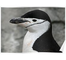 Chinstrap penguin 12 Poster