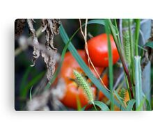 Tomato Garden Photograph Canvas Print
