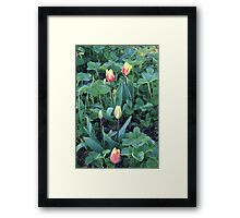 Flame Tulips Framed Print