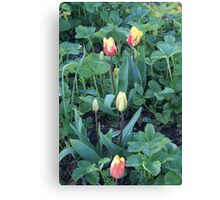 Flame Tulips Canvas Print