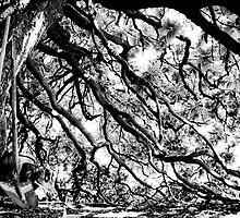 ancient tree by 7incondotta