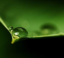 Drops on a leaf... *2* by Bob Daalder