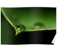 Drops on a leaf... *2* Poster