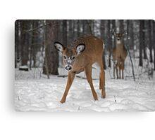 Curious Deer Canvas Print