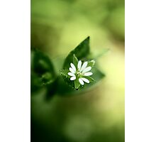 Contrast in Green Photographic Print