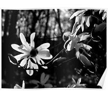 Lovely White flowers Poster