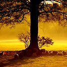 """""""IN THE SHADE OF THE OAK"""" by snapitnc"""