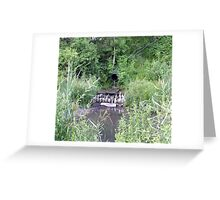 Willow Patch Rain Gardens Reused Concrete Apron Greeting Card