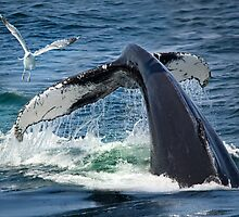 Whale of a tail! by bettywiley
