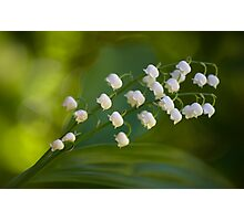 The subtle scent of spring Photographic Print