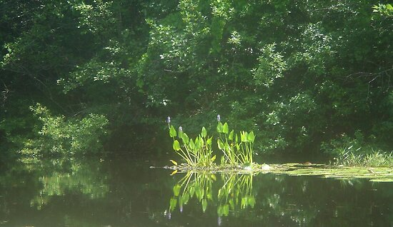 PICKEREL WEED ISLAND by May Lattanzio