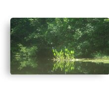PICKEREL WEED ISLAND Canvas Print