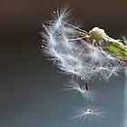 Dancing Dandelions by Joyce Knorz