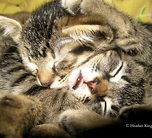 Sleeping Beauties by Heather King