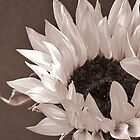 Sepia Sunflower by Barbara Rahal