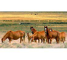 Save The Cherry Creek Mustangs Photographic Print