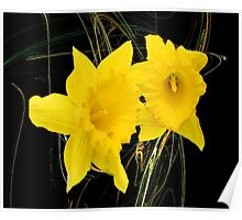 The Dainty Daffodils Poster