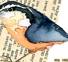 Red-Breasted Nuthatch (Sitta canadensis) by Carol Kroll