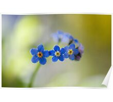 Forget me nots Poster