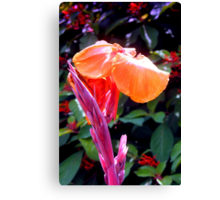 Canna lily with spike in soft focus Canvas Print