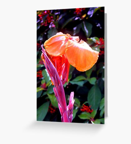 Canna lily with spike in soft focus Greeting Card