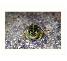 Nocturnal Frog - Bool Lagoon Sth. Australia Art Print