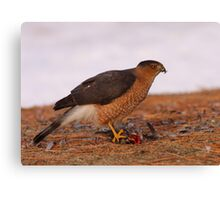 Feathered Feast/Cooper's Hawk Canvas Print