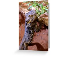 Bearded Dragon - Alice Springs, N.T. Australia Greeting Card