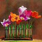 Tulip experiments by Jeff Burgess