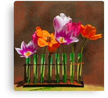 Tulip experiments Canvas Print