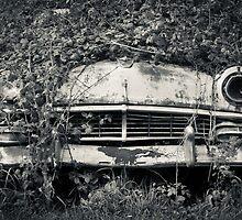 recluse by Andrew Bradsworth