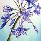 Agapanthus Surprise - Flowers by © Linda Callaghan
